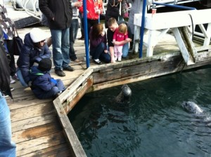 Feeding Oak Bay Seals